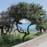 Das Wetter im Mai auf Mallorca