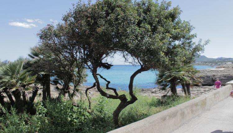 Wetter Mallorca Mai Erfahrungen