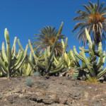 Das Wetter und Klima auf Fuerteventura im September