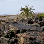 Das Wetter und Klima auf Lanzarote im Juni