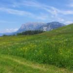 Das Wetter und Klima in Südtirol im Juni