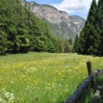 Das Wetter und Klima in Südtirol im Mai