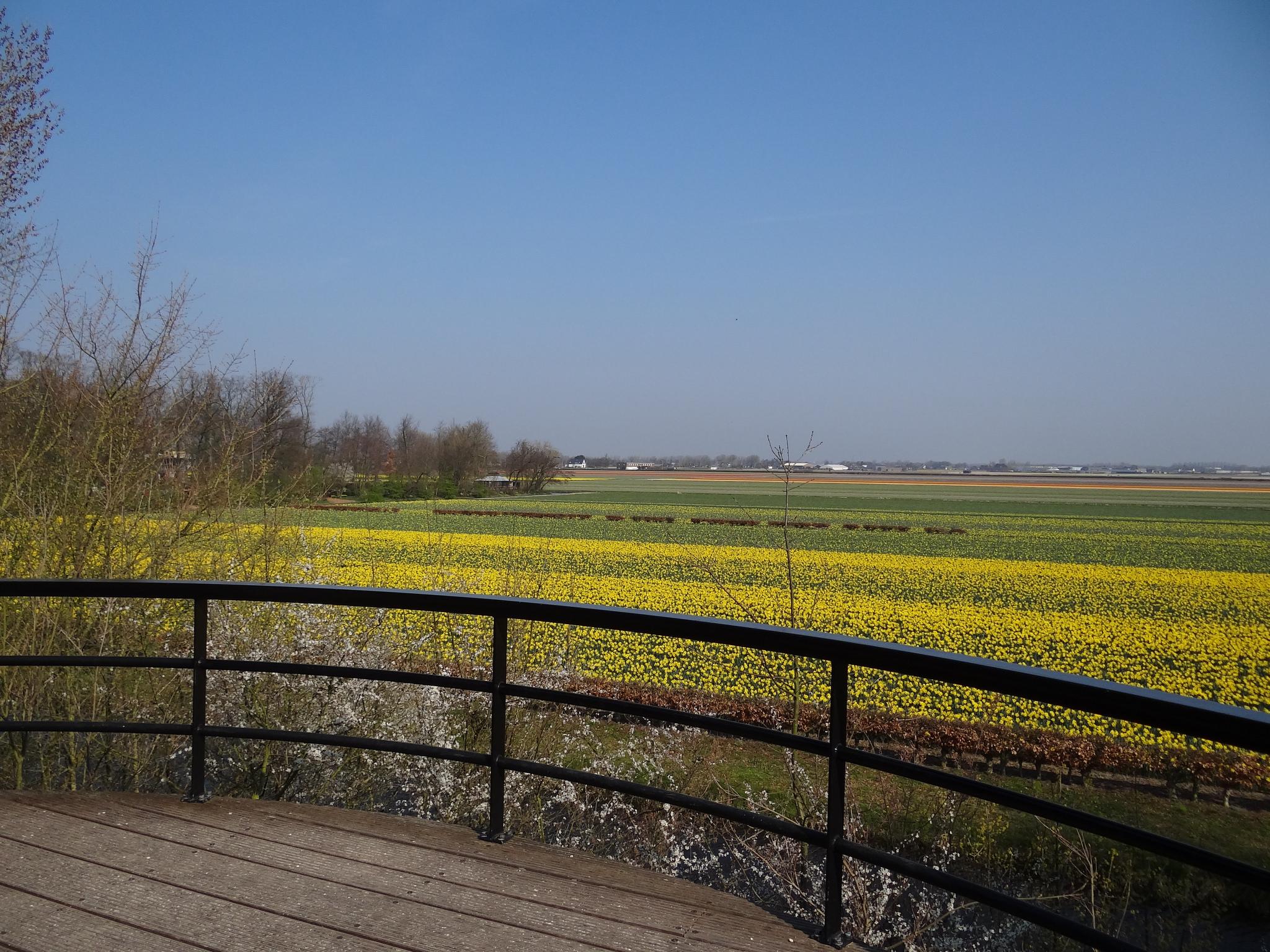 wetter der niederlande im m u00e4rz  temperatur  u0026 klimatabelle