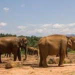 Das Wetter und Klima in Sri Lanka im April