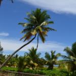 Das Wetter und Klima in Sri Lanka im Mai