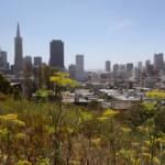 Das Wetter und Klima in San Francisco im Juni