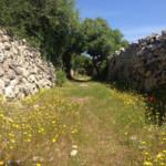 Das Wetter und Klima auf Menorca im Mai