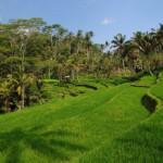 Das Wetter und Klima auf Bali im Oktober